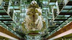 Homónimos: Biblioteca Vasconcelos. Primera parte