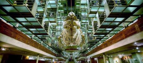 Biblioteca Vasconcelos, emblemática e imponente - elsouvenir.com