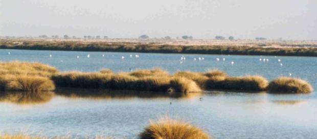 Doñana, la más bella y amenazada joya natural e Europa.