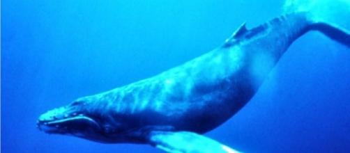 Confira a lista com os 50 desafios do jogo Baleia Azul (Foto: Reprodução)