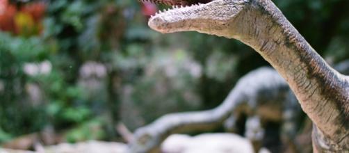 Si rischia un'estinzione simile a quella dei dinosauri.