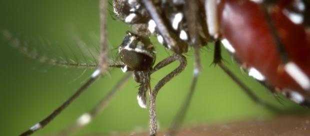 Curiosità: 'Perchè alcune persone vengono punte dalle zanzare e altre no?... - bimbonaturale.org