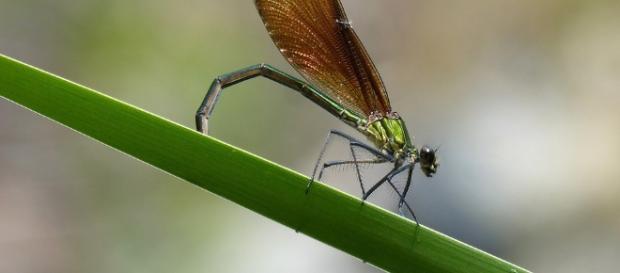 Free photo: Dragonfly, Damselfly - Free Image on Pixabay - 2453840 - pixabay.com