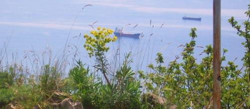 mare visto dalla vedetta di S.Croce, Trieste
