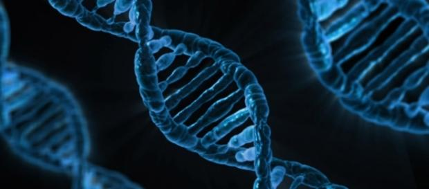 CRISPR-Cas9 is an innovative gene modification technique. Photograph courtesy of: PublicDomainPictures/Pixabay