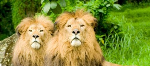 7 animais que praticam homossexualidade | Discovery - com.br