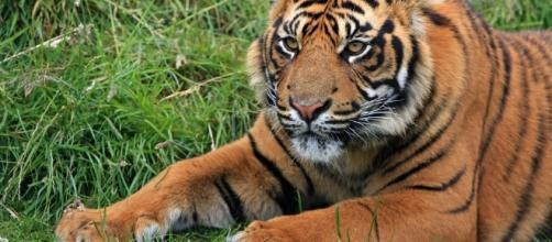 Determining what you want out of a situation, Tiger, is entirely up to you - Image via pixabay.com