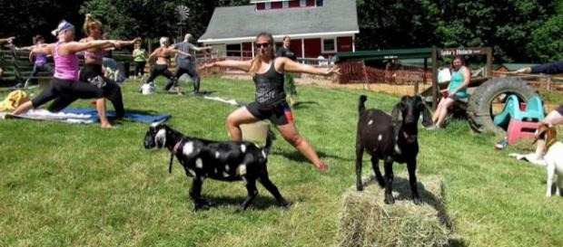 Yoga with goats is the latest craze in fitness classes [Image: YouTube/cleveland.com]