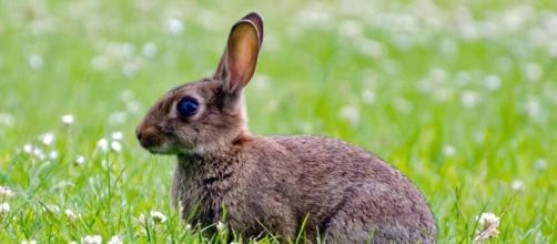 Brown, Rabbit - Free images on Pixabay - pixabay.com