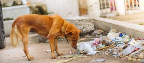 Cane abbandonato trovato morto in terrazzo.