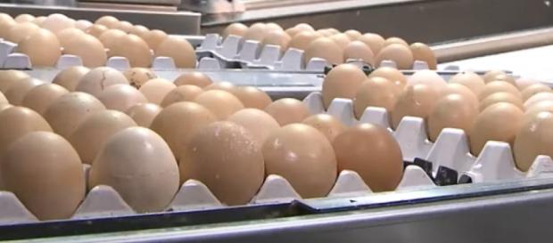 Attenzioni puntate sulle uova anche in Italia