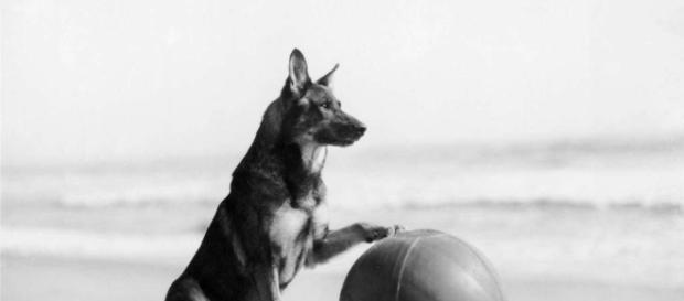Rin Tin Tin tornou-se o cão mais famoso do cinema