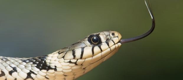 Snake - Free images on Pixabay - pixabay.com