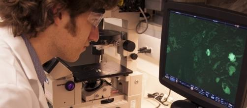 Stem Cell Application for multi organ appliation research in an FDA Laboratory in an NHI campus in Bethesda, Md. (Image by the USFDA/Flickr)