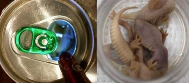 Homem sente gosto estranho em cerveja e encontra lagartixas mortas na lata.