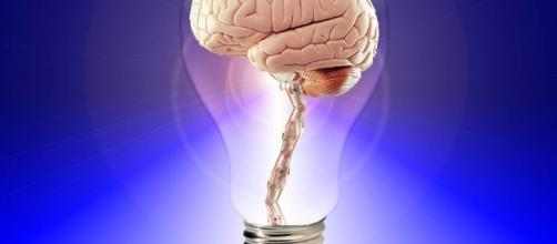 Free illustration: Brain, Think, Human, Idea - Free Image on ... - pixabay.com