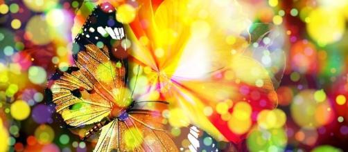 Free illustration: Butterfly, Bokeh, Magic, Dream - Free Image on ... - pixabay.com