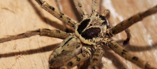 L'Aracnofobia, la paura irrazionale dei ragni è una delle più comuni fobie