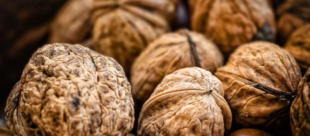 Freshly collected Walnuts of various sizes. [image via Adamjasonmoore, Wikimedia Commons]