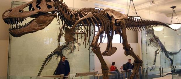 T.Rex Fossil | J.M. Luijt | Wikimedia