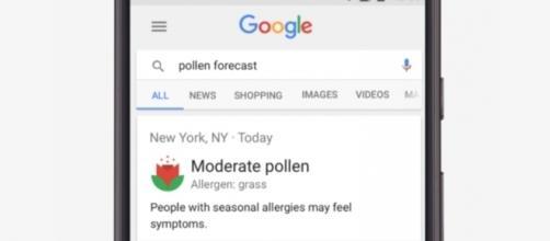 """La nuova opzione di """"previsione polline"""" su Google Mobile (Fonte: Google)"""