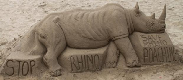 Rhinos have suffered mass poaching in South Africa | https://c1.staticflickr.com/3/2907/14033457438_57c1728144_b.jpg
