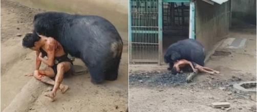 Homem provoca urso e é atacado