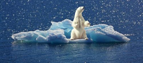 polar-bear running out of ice pixabay CC0