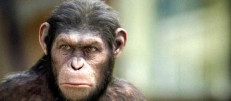 'Planet of the Apes: Last Frontier' video game announced / Photo via Ares Ryo, Flickr