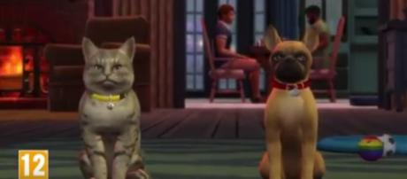The Polish trailer of the Cats and Dogs expansion pack for 'The Sims 4' has just been leaked online. SimsCommunity/YouTube