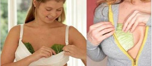 O repolho ajuda a aliviar sintomas de artrite e reumatismo