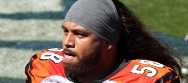 Rey Maualuga played eight seasons with the Bengals before he was released in March -- Jeffrey Beall via WikiCommons