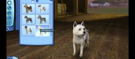 "Pets in ""The Sims 4"" can be dressed and accessorized 