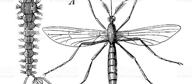 Zanzare, forse ti manca sapere una cosa