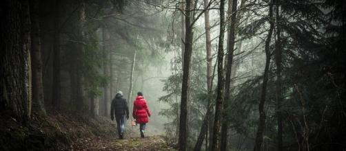 Walking, Forest, Image via Pixabay.