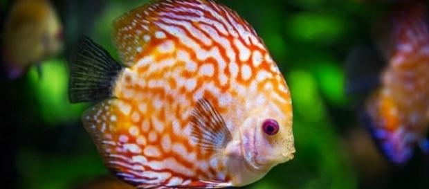 Warming ocean waters could shrink fish size by 30 percent, says study [Image: Pixabay]