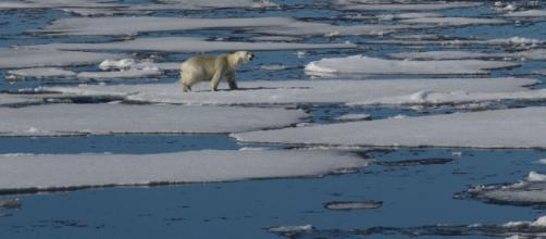 Si sciolgono i ghiacci tra USA e Russia - Sputnik Italia - sputniknews.com