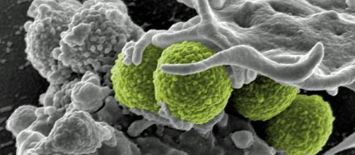 Bacteria superbugs via Pixabay