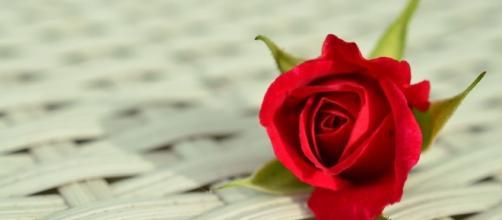 Rose , Love, Romance. Image via Pixabay
