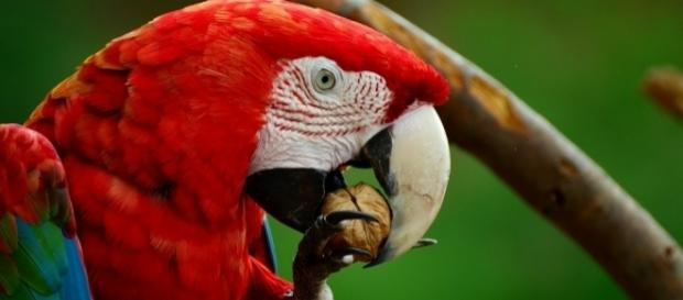 A parrot put his dead owner's wife behind bars [Image: Pixabay/CC0]