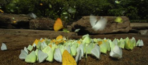 Estação Ecológica do Jari, no Pará, tem área sobreposta à Renca. Crédito da imagem: Zig Koch/WWF