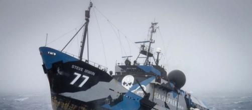 Sea Shepherd: i 'pirati delle balene' rinunciano alla lotta in mare - ruya.io