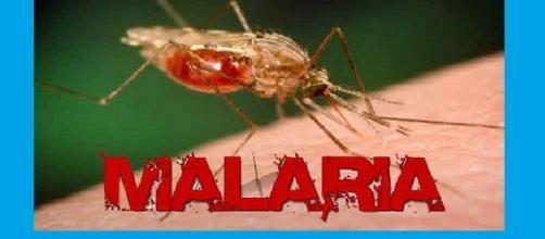 Sempre più efficiente la lotta alla malaria, sia nella profilassi, con il primo vaccino, che nella terapia, con l'uso di combinazione di farmaci.