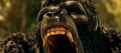 Gorilla Grodd/ photo via @screenrant via Twitter