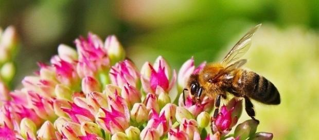 Pollinators don't like artificial light around flowers [Image: Pixabay]