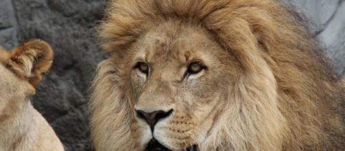 Sometimes a good cry is simply all you need to get back to reality Leo - Image via pixabay.com