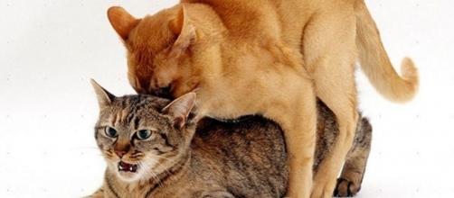 Para que seu gatinho fique sempre saudável é necessário cuidados especiais