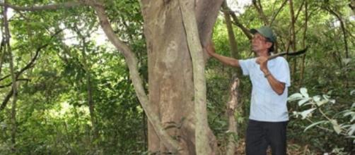 Veterano del Vietnam vigilando el bosque