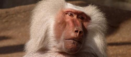 Daily Chinese Horoscope For Monkey — August 9 (Image via pixabay.com)