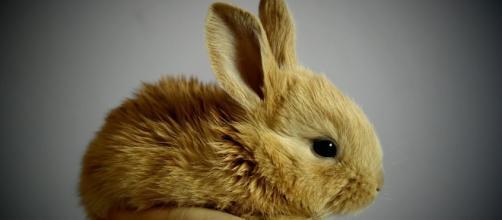 Chinese Horoscope Rabbit August 9 Image via pixabay.com